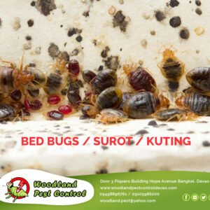 Did you know that bed bugs can survive without food for up to 15 months!?  Conta…