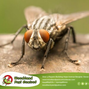 FLIES! Annoying. Disgusting. Disease Carriers.  Contact us now for flies inspect…