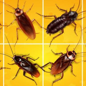 Get Rid of cockroaches call us now
