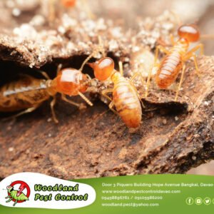 Termites are swarming this time of year! Schedule a termite treatment during the…