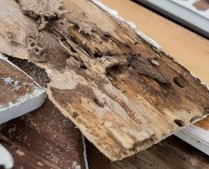 Termites commonly attack household materials such as:  – Timber decking & fl…
