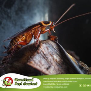 Is your house being attacked by cockroaches?   Don't panic, we'll take…