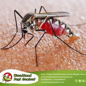 Mosquitoes are complex characters and there are many factors to how they choose …