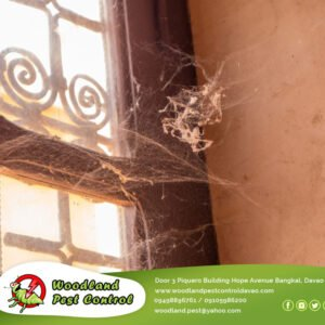 Have you ever walked through your doorway and found yourself tangled in spider w…
