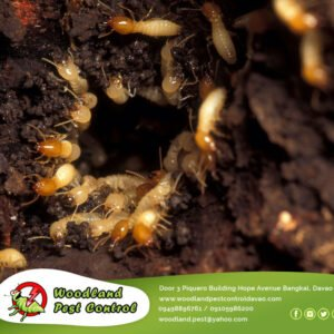 If your home has been damaged by termites throughout the holiday season, Santa w…