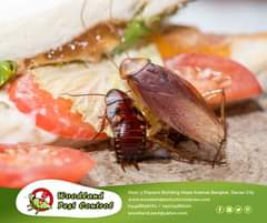 Pests like mice and cockroaches are looking for similar indoor environments. The…