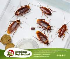 Don't let cockroaches be the reason that your restaurant loses its profit. At Wo…
