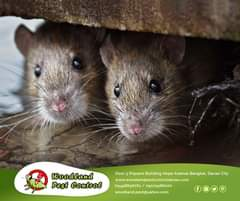 Worried about rats finding their way inside your properties this summer?   CALL …