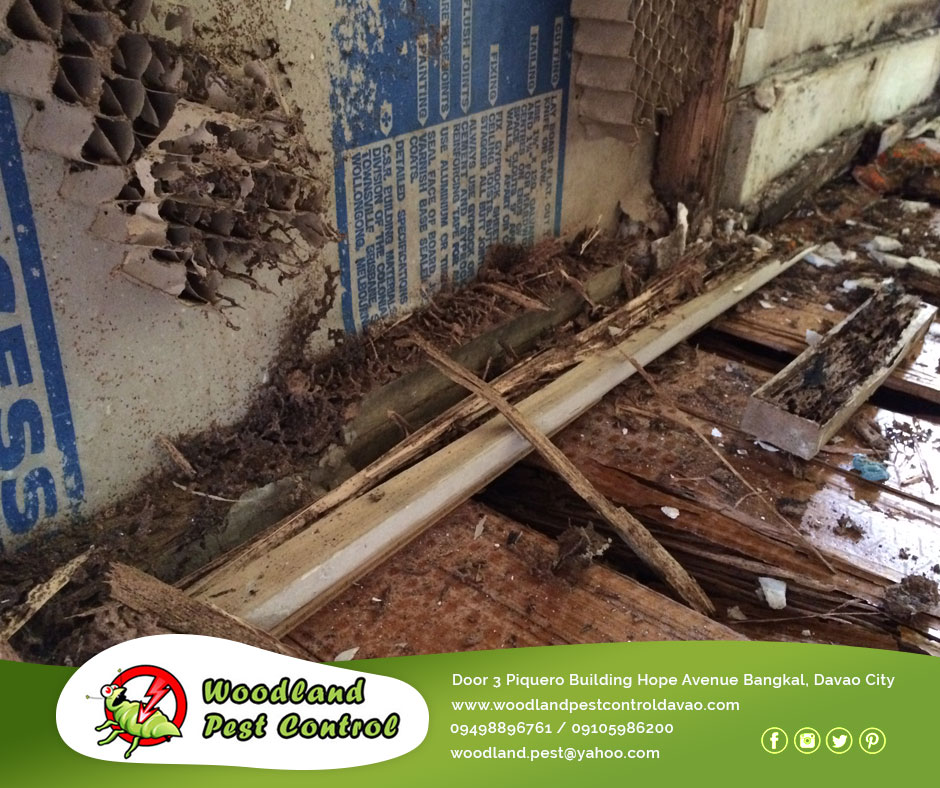 General Pest Control Davao