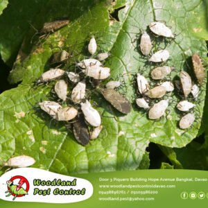 Unfortunately, you usually don't know you have a pest problem…
