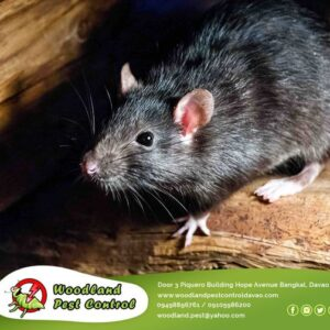 Due to quarantine, Pests & Rodents often make their way into the premises