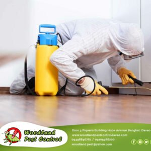 The best way to get rid of termites is to have a team…