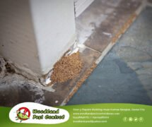 Pest Control Services in Davao