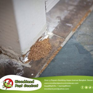 Termites can actually cause damage to structural integrity