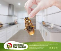 Best Pest Control in Davao