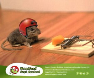 Best Pest Control Services in Davao City