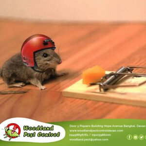 One of the most common myths in pest control is that cheese should be used to bait mice and rodents