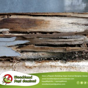 Termite damage sometimes appears similar to water damage