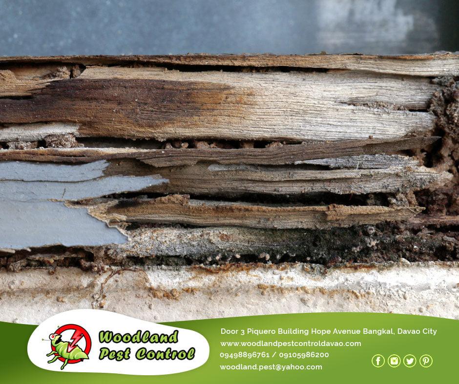 Best Pest Control Davao City