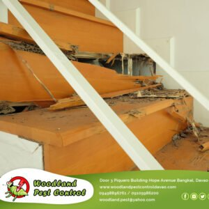 Most of the time termites are difficult to detect…