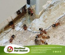 Best Pest Control in Davao City