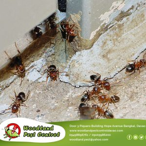 Having a clean house doesn't mean you are safe to bugs and other pests